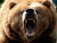 lācis